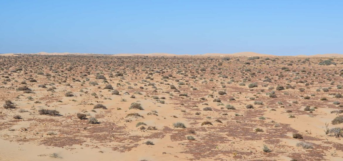 EC Proposes Preferences to Western Sahara Products Based on EU – Morocco Association Agreement