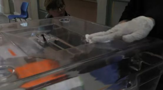 France Sees Lowest Turnout in Local Elections amid Coronavirus Epidemic
