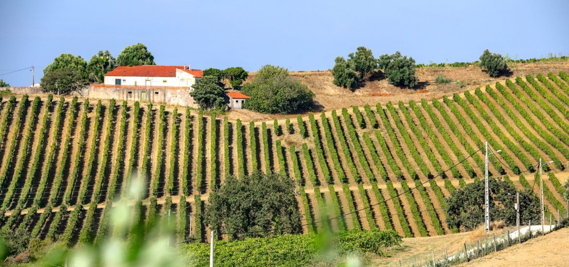 Will Portugal's EU presidency protect agricultural producers?