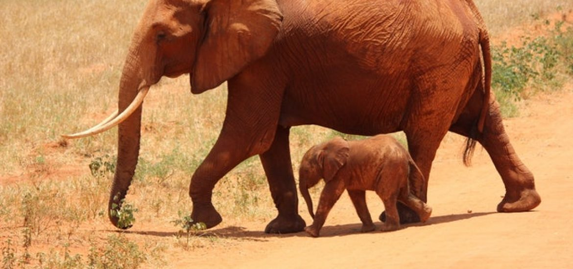 British High Court Upholds Ban on Ivory Trade