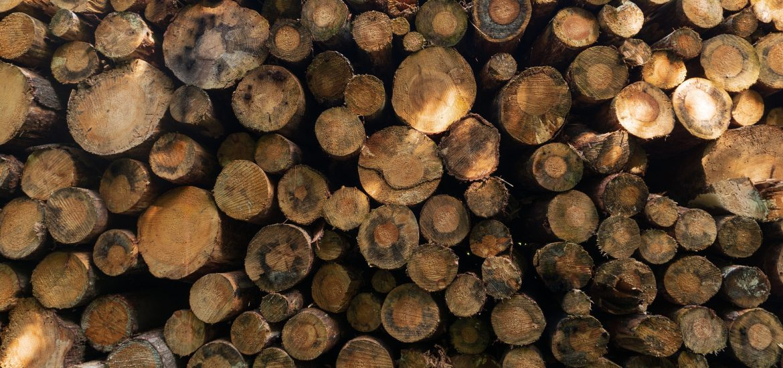"Indonesia hits back at EU palm oil ""discrimination"""